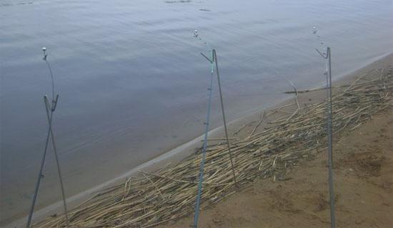прикормка для ловли рыбы реке