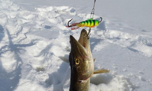 Тактика зимней ловли щуки на балансир