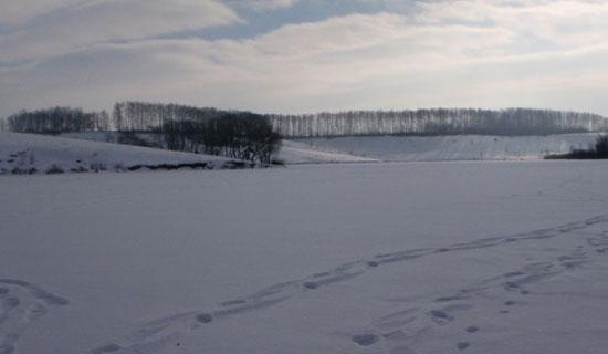 Ловля живца зимой