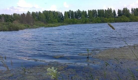 прикормка для ловли корюшки летом