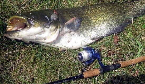 где клюёт рыба в ярославской области форум