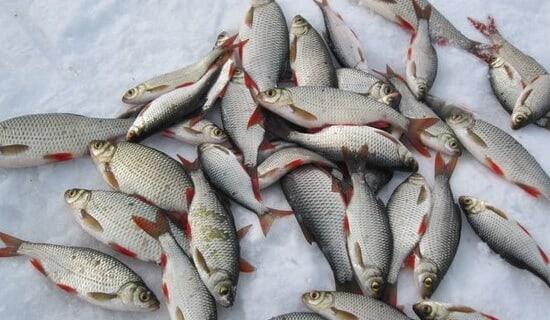 Рыбалка на плотву по первому льду