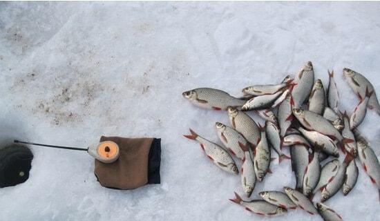 Ловля крупной плотвы зимой
