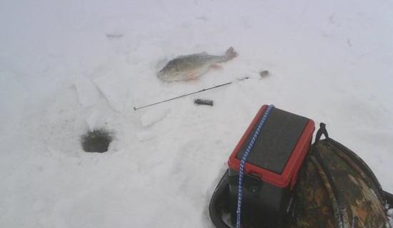 Ловля окуня зимой на балду