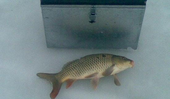 Цены на ящики для зимней рыбалки