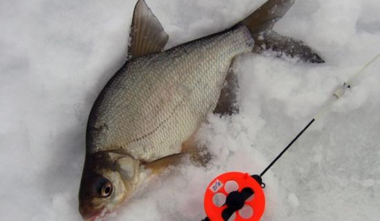 Ловля леща зимой на коромысло