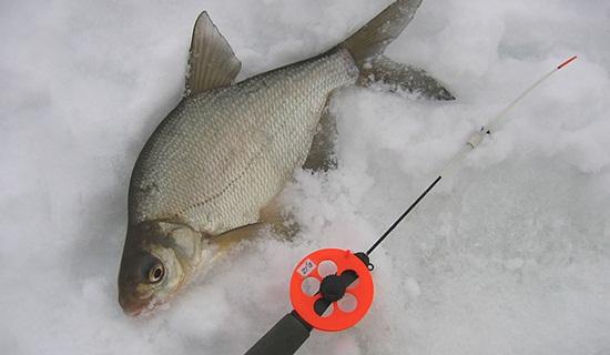 Ловля леща по последнему льду