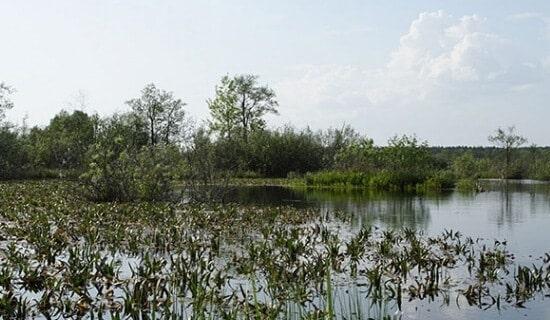 Рыбалка на озере Палецкое