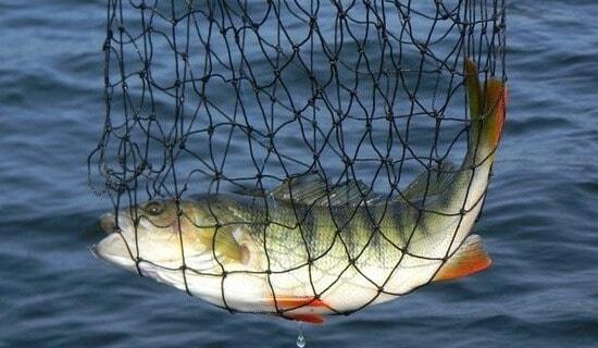 Рыбалка на Вазузском водохранилище
