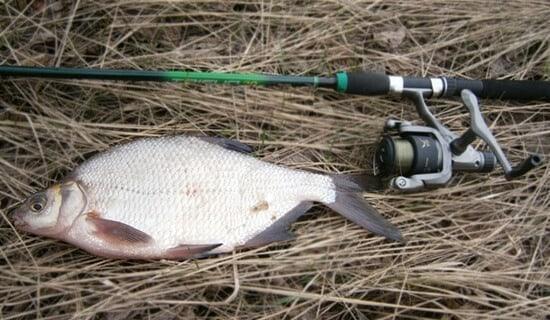 когда клюет рыба зимой