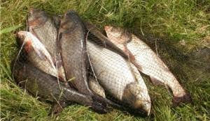 рыбалка макеевка толстолобик форум