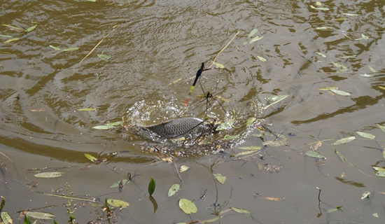 магинск рыбалка
