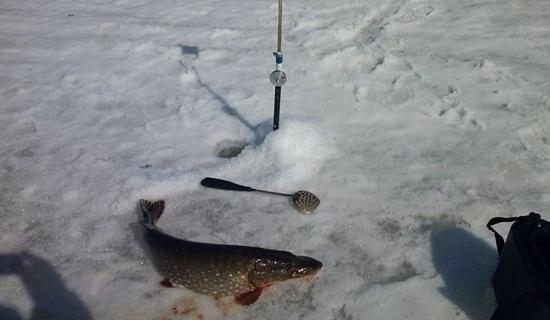на что клюет на рыбинском водохранилище