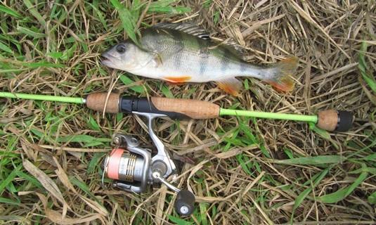 Ловля окуня на реке
