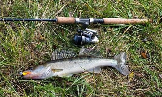 Ловля судака на реке