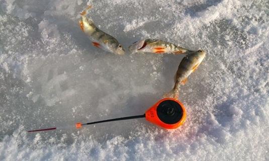 Ловля окуня зимой на мормышку