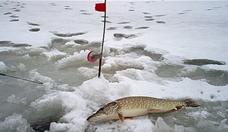 Ловля крупной щуки зимой